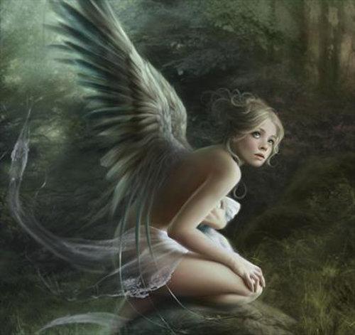 Plumas y alas de ángel