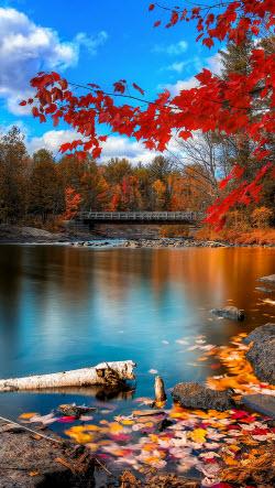 Río en el otoño